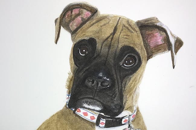 Watercolor painting of a pet Boxer dog named Jerzy