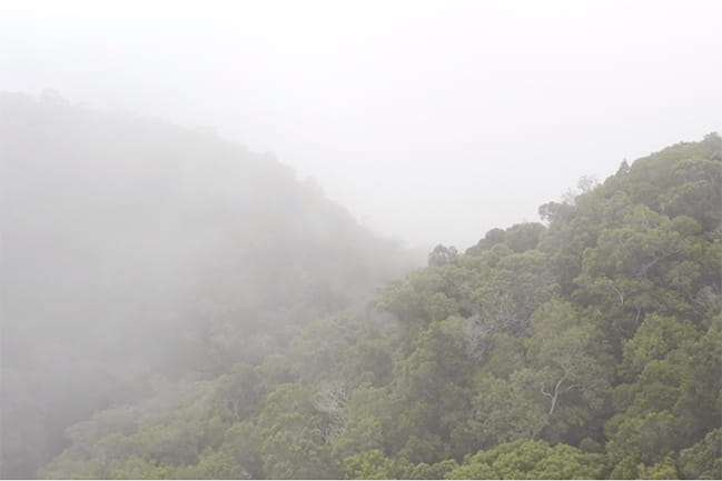 misty green mountains