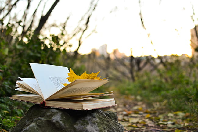 Open book with yellow leaf inside on a rock in a field